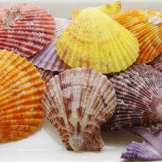 Thema van het strand Schelp Decoratieve Accessoires (40 stuks) (131036846)